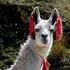 Avatar för Llama_of_Time