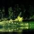 Avatar for greenest_night