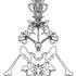 Avatar de litlanac