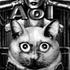 Avatar for AoI_1
