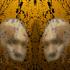 Avatar de Manichope