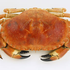 Avatar for CrabKebab