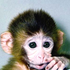 Avatar di small_monkey