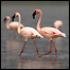 Avatar for FlamingosAtRisk
