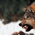 Avatar de Fenriswolfnj