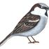 Avatar for Birdicus