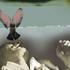 Avatar for tushcancheg