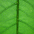 Avatar de bioplan