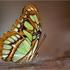 Avatar for petitpapillon2