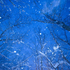 Avatar de snowflux