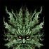 Avatar di GrennManTalking