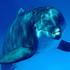 Avatar di DolphinGuitar