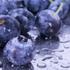 Avatar for BlueberrySalt