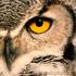 Avatar di OWL55