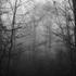 Avatar de nevoeiro