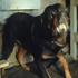Avatar for rottingdogs