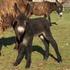 Avatar for donkey71