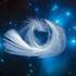 Avatar for white-cygnus