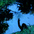 Avatar de raijaevelin