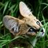 Avatar for Skunks