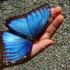 Avatar di butterflynette