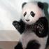 Avatar de pandasinn