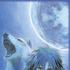 Avatar di Esfimeralrain