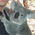 Avatar for da-koala