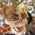 Avatar de Headspaced