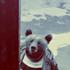 Avatar för Schizoid_bear