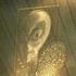 Avatar de mysurfacedotorg
