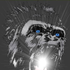 Avatar for silverbackrdt