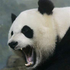 Avatar for Pandadude3000