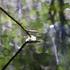 Avatar for herbania