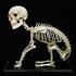 Avatar for esqueletos