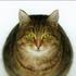 Avatar for darkest_cat