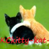 Avatar for X-KCkitty-kat-X