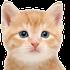 Avatar for kitty_purr_purr