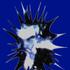 Avatar for Bluxus