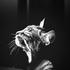 Аватар для Elvis-Wolfhound
