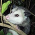 Avatar for AwesomeOpossum