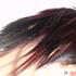 Avatar for sillygirl1313