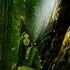 Avatar for hiboucesira