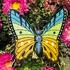 Avatar for Motylalke