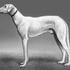 Avatar for Katzen_Hund