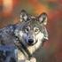 Avatar de Lobo7922