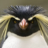 Avatar di Blue_Rockhopper
