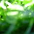 Avatar de greenisgold