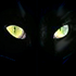 Avatar for chats_noirs
