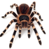 Avatar for SpiderPL